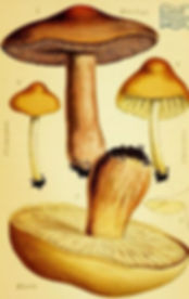 mushrooms.JPG