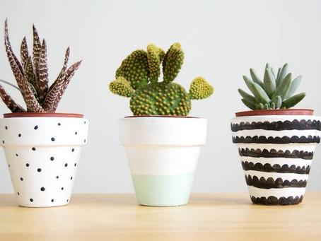 Tipos de planta | Suculentas