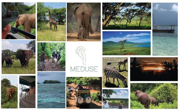 Os 5 Safaris a não perder  na Tanzânia!