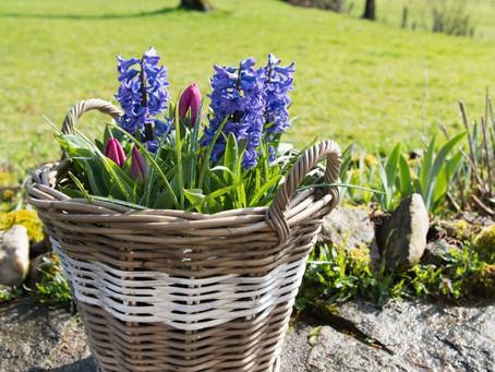 5 Top Spring Landscaping Tasks