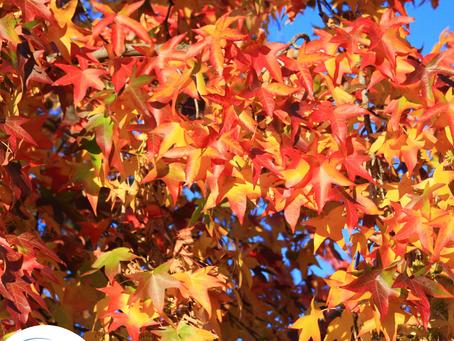 5 Must-Do Fall Activities in Sacramento, California