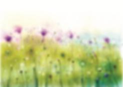 Blumen-dr-Leitner.png