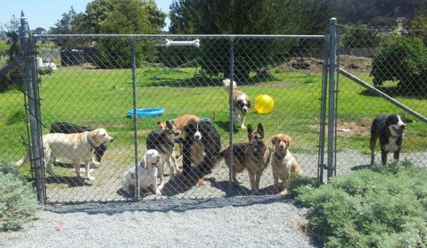Dogwood Ranch Pet Resort