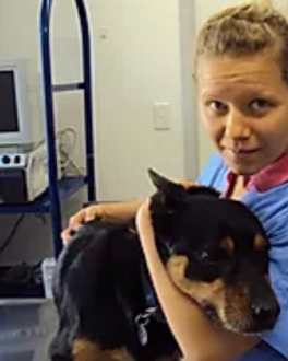 Sidsel Crumbley vet nurse gunnedah pet v