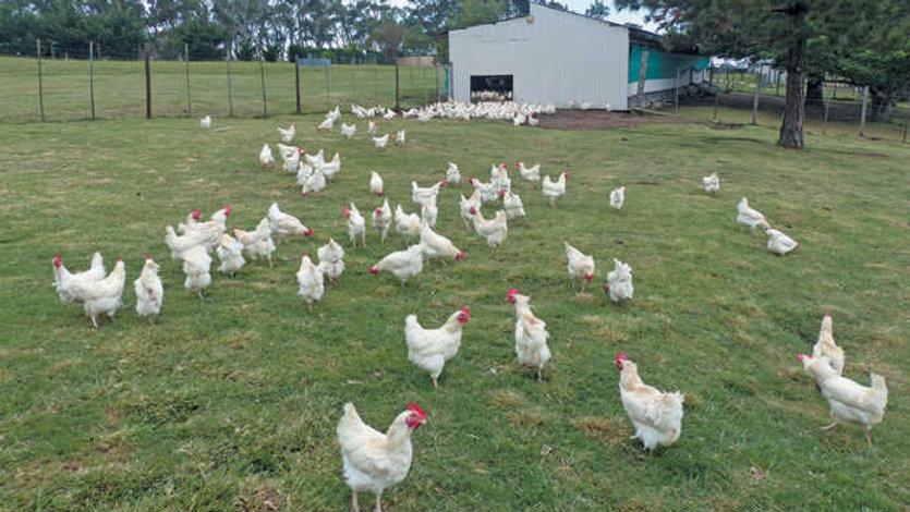 Poultry Litter Gobbler(TM)