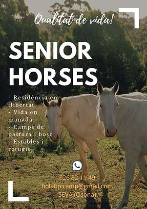 Bordered Photo Horse Poster.png