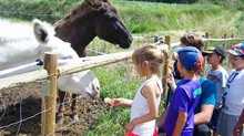 Tipi Camp Educa - Aula de natura