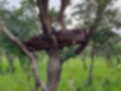 Honey-03_1_nett.jpg