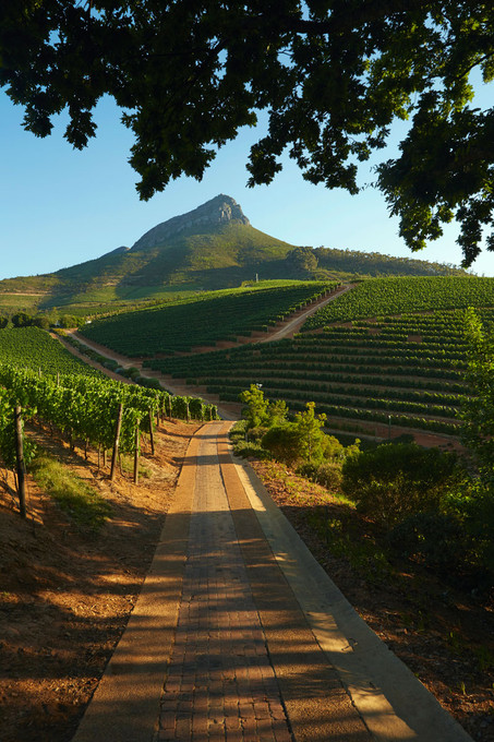 Winelands_de-graff-wine-estate-nett.jpg