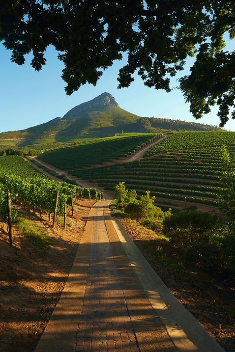 Winelands_de-graff-wine-estate-nett.jpg