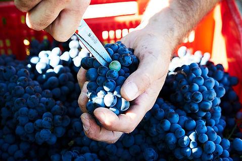 Wine-Thief-03_nett.jpg