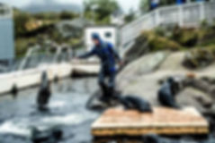 Stars_Lofoten-Aquarium-Thomas-Rasmus-Ska