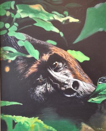 Lowand Mouintain  Gorilla