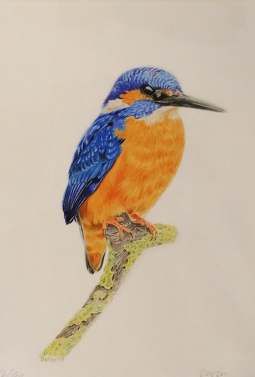 'Kingfisher' Mounted Giclée Print
