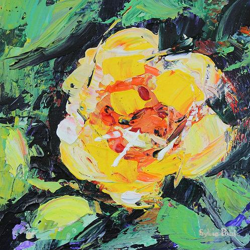 'Yellow Rose'