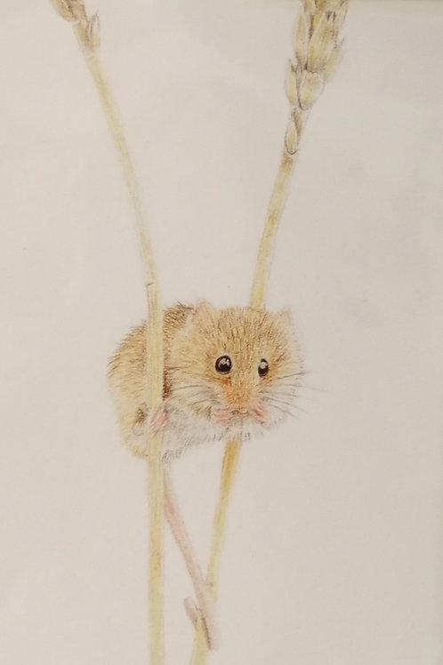 'Harvest Mouse' Mounted Giclée Print
