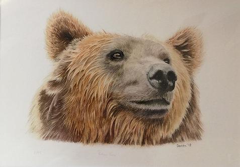 'Brown Bear' Mounted Giclée Print