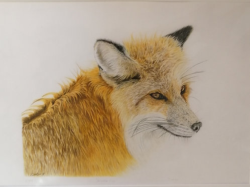 'Winter Fox' Mounted Giclée Print