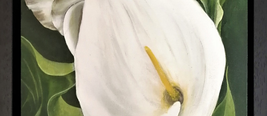 Arum Lilies 2