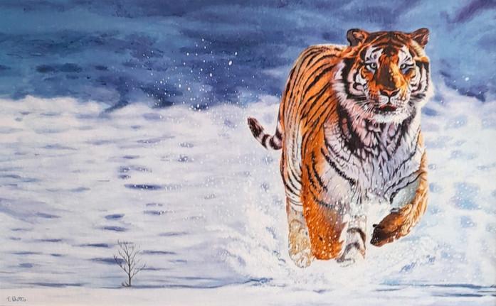 Chasing Tiger