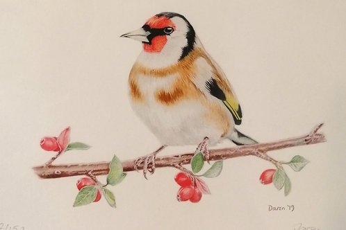 'Goldfinch' Mounted Giclée Print