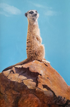 Meercat on the Lookout