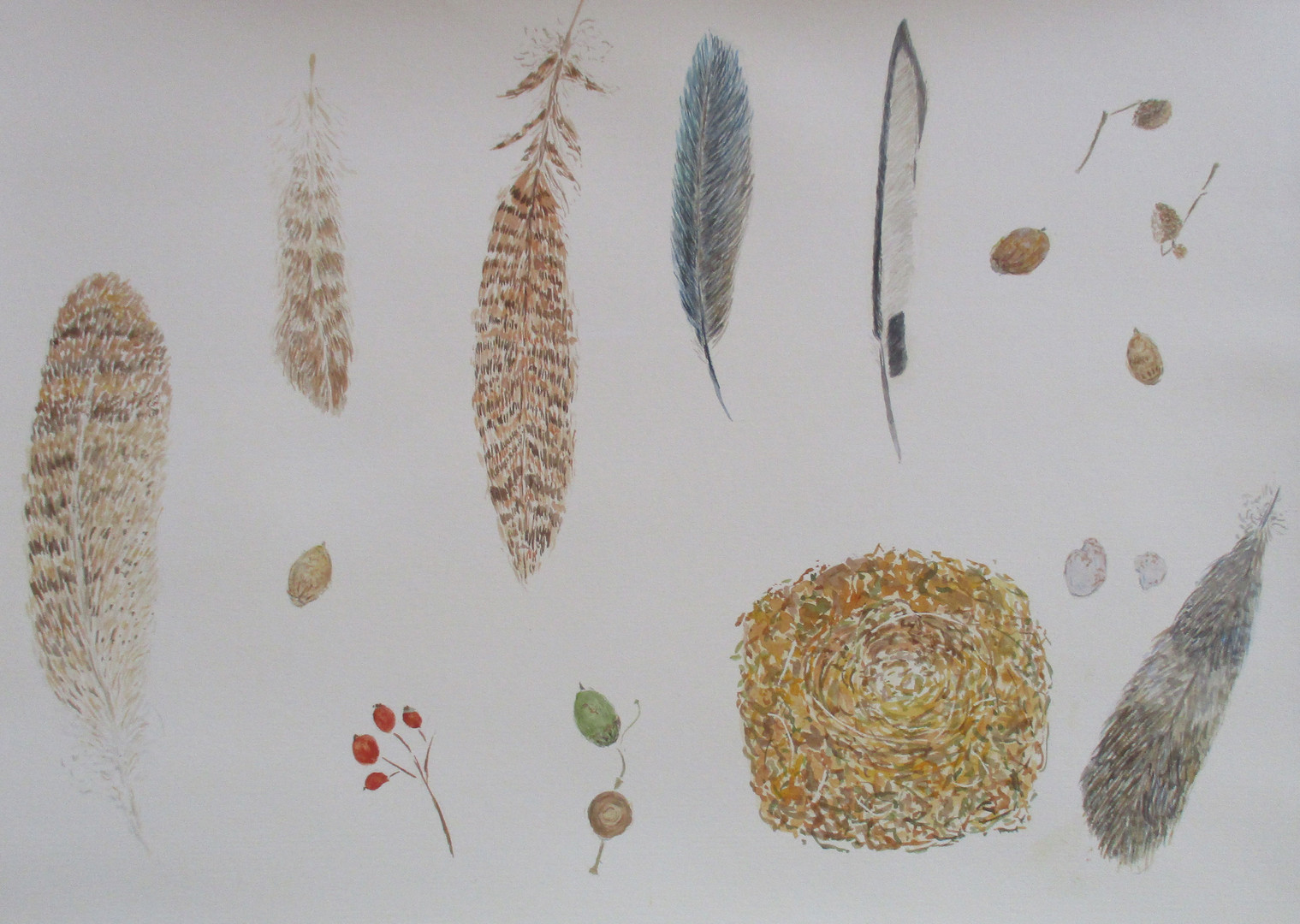 Autumn Still Life with Feathers and Robin's Nest