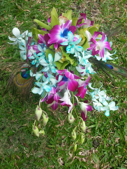 Orchids & Peacock Feathers