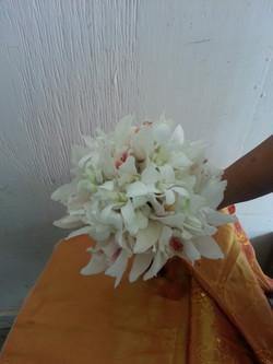 Dendrobium & Cymbidium Orchids