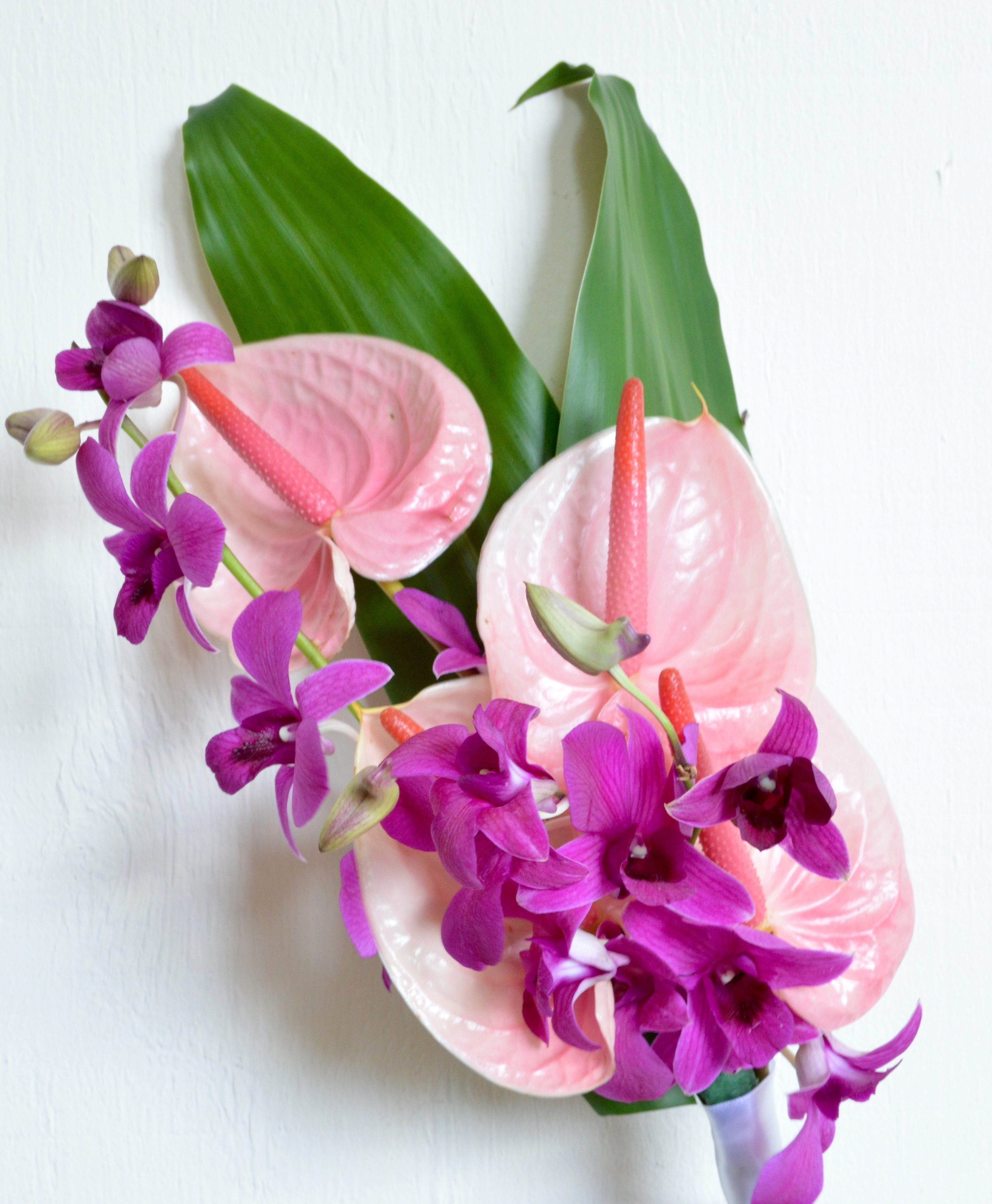Anthiriums & Orchids