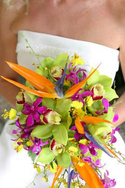 Orchids & Birds of Paradise