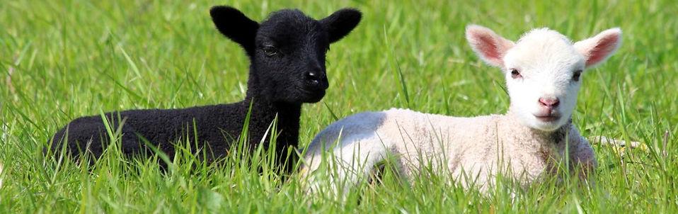 farmstay_02-1457x1024_edited.jpg