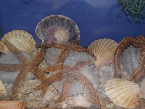 Shellfish display