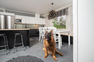 koira-keittiossa.jpg