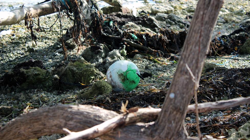 17_Broken Lobster Trap Washed Ashore