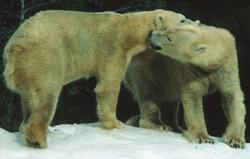 e15b Bear Couple