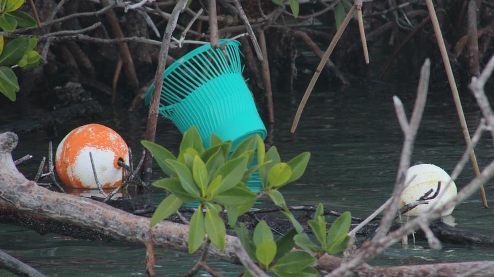 21_Broken Loster Bouys Littering The Mangroves.