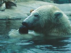 e15a Bear ball