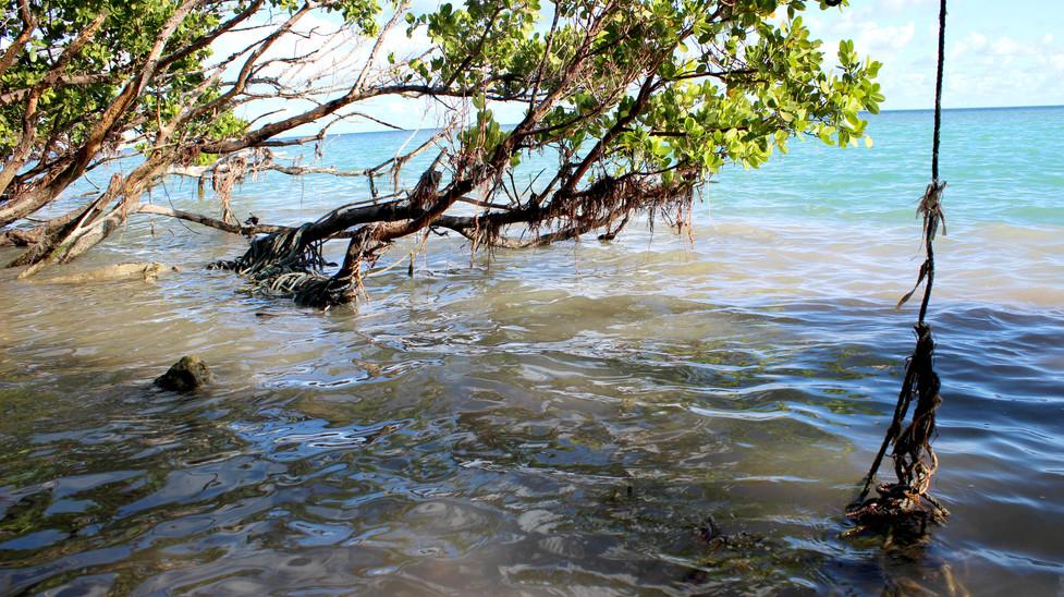 13_Broken Lobster Lines Strangling The Mangroves.