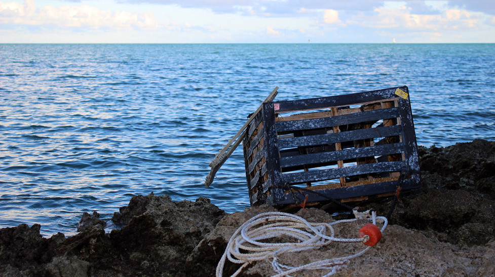 22_Abandoned Lobster Trap Ashore
