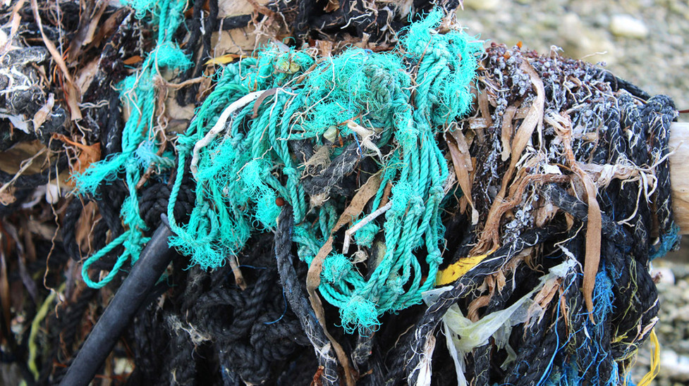 14_Web of Broken Lobster Lines Strangling The Mangroves - Detail.