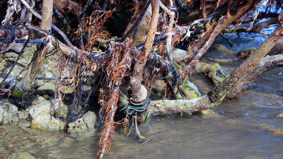 11_Broken Lobster Lines Strangling The Mangroves No.3
