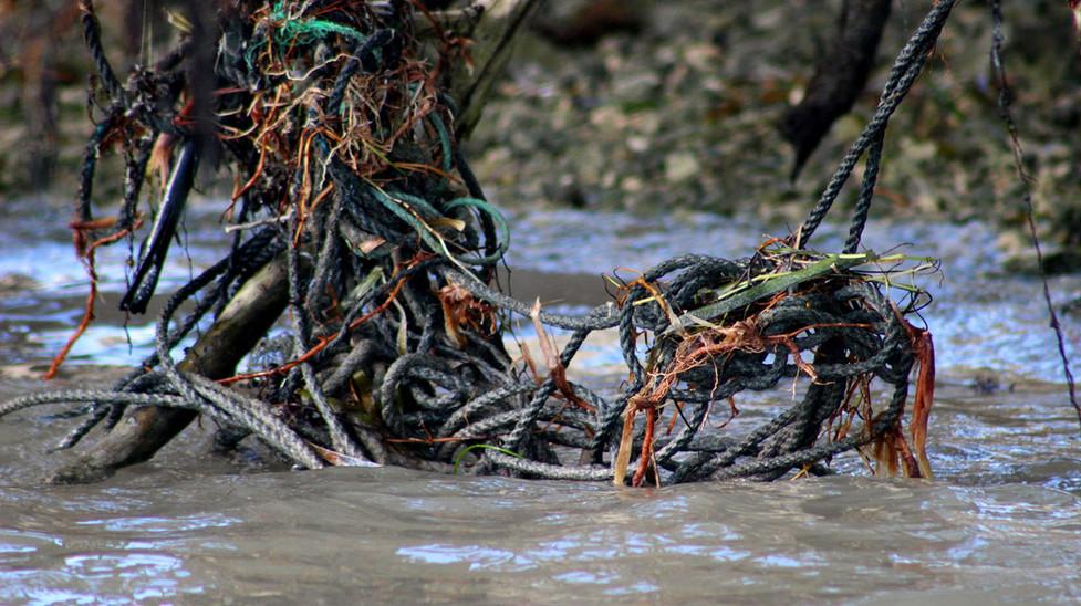 07_Broken Lobster Lines Strangling the Mangroves.