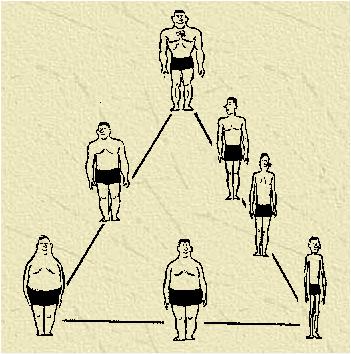 Endomorf (vänster), Mesomorf (upp), Ectomorf (höger), och några mitt emellan!