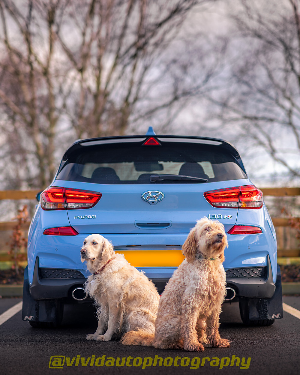 Hyundai i30N Performance | Golden Doodle and Golden Retriever