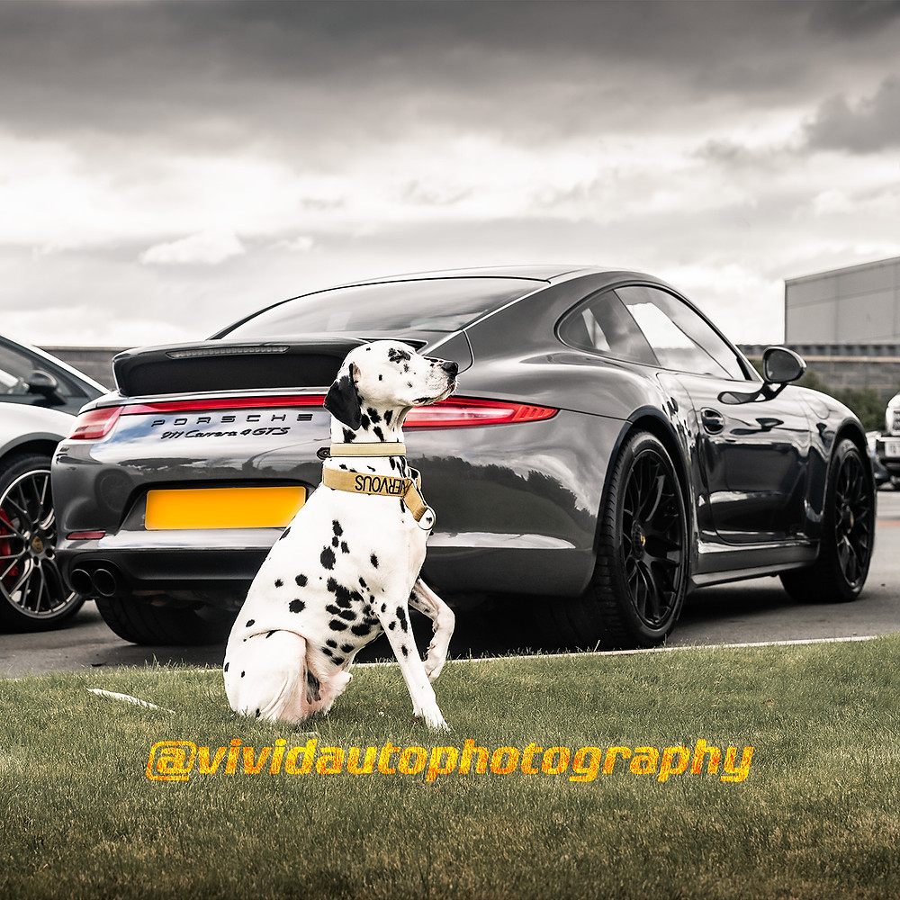 Porsche 911 Carrera 4 GTS and Dalmatian | Agate Grey