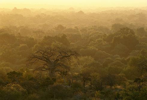 Limpopo Ridge Bushveld.jpg