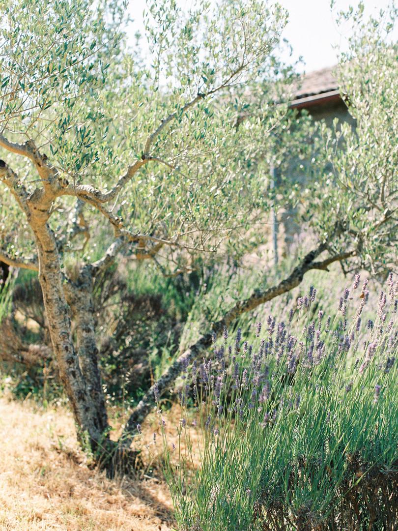 Olivegarden Villa Montanare