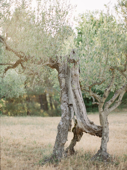 highest oliveterrace.jpg