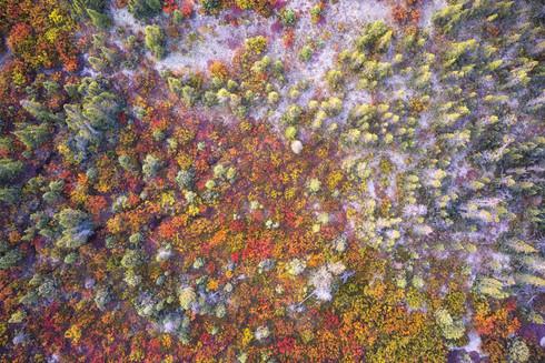Tundra Blush